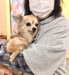 神奈川 保護 犬